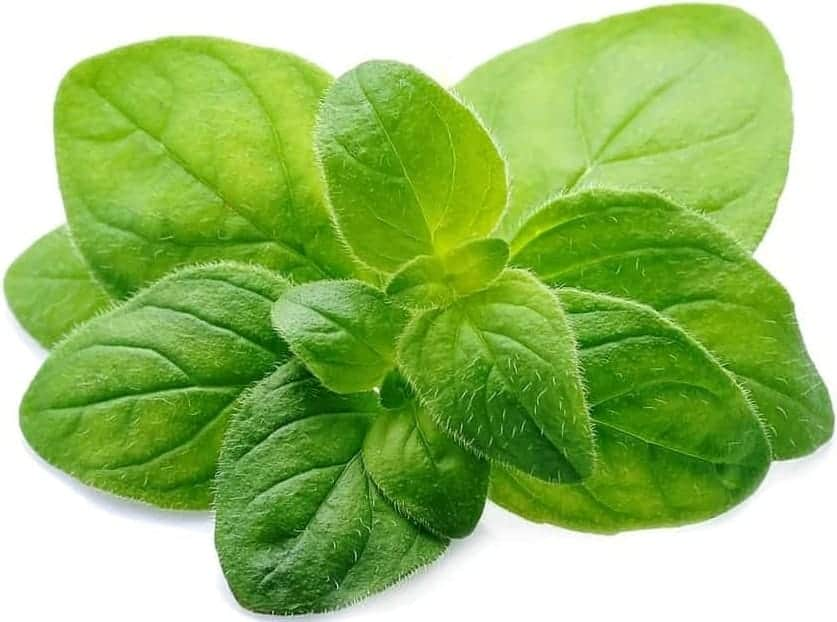 A cluster of oregano leaves on a white surface.
