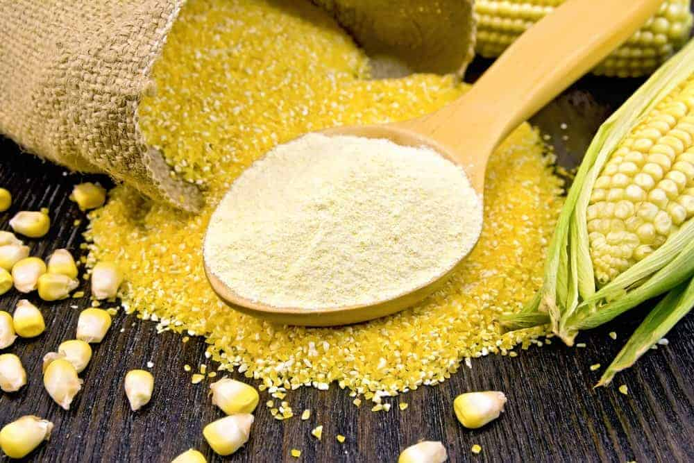 A spoon of corn flour lies on top of a spilled sack of corn grains with corns on the background.