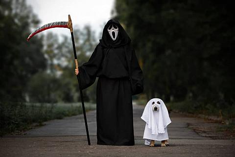 Dog and owner in costumes posing for Halloween.