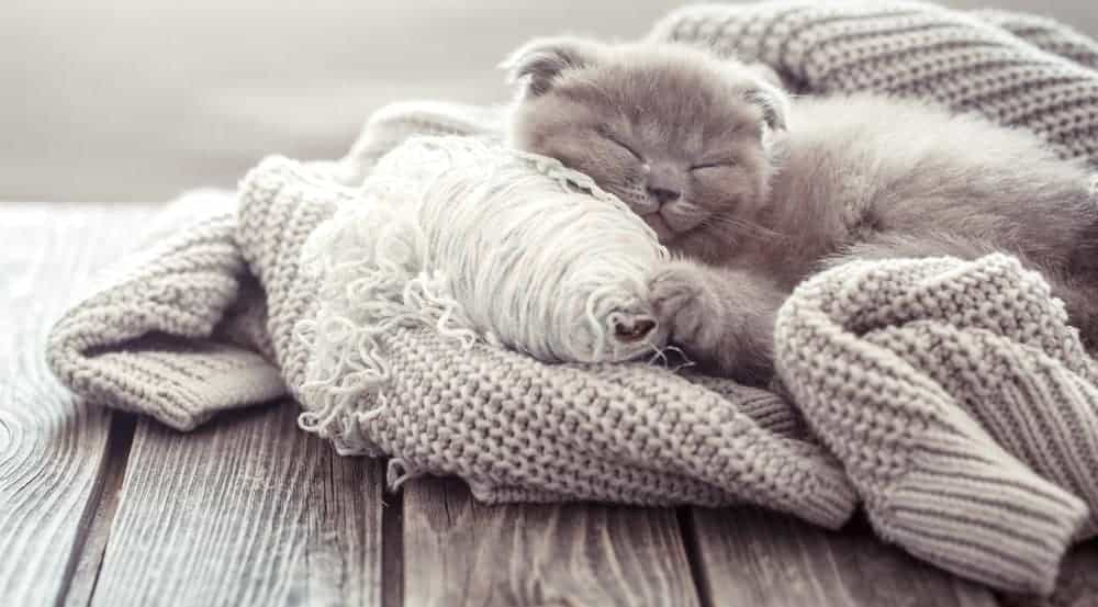 Fluffy kitten sleeping on a knitted sweater over wood plank table.