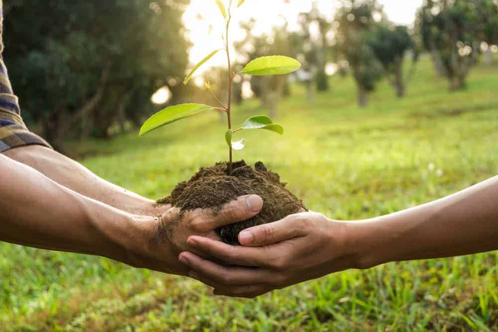 A close look at a couple planting a tree sapling together.