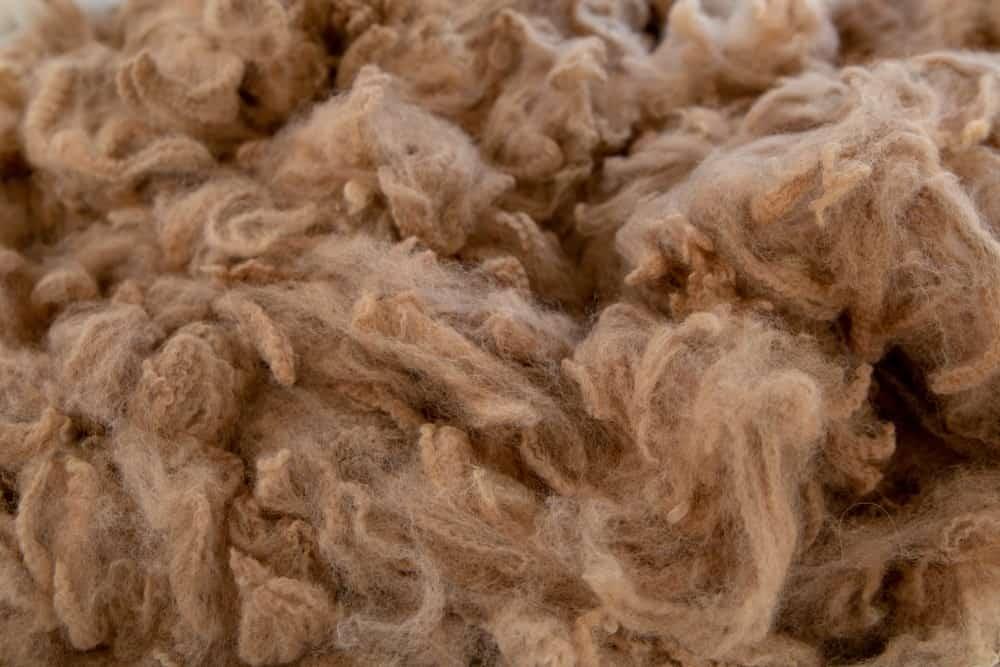 A close look at clumps of alpaca wool.