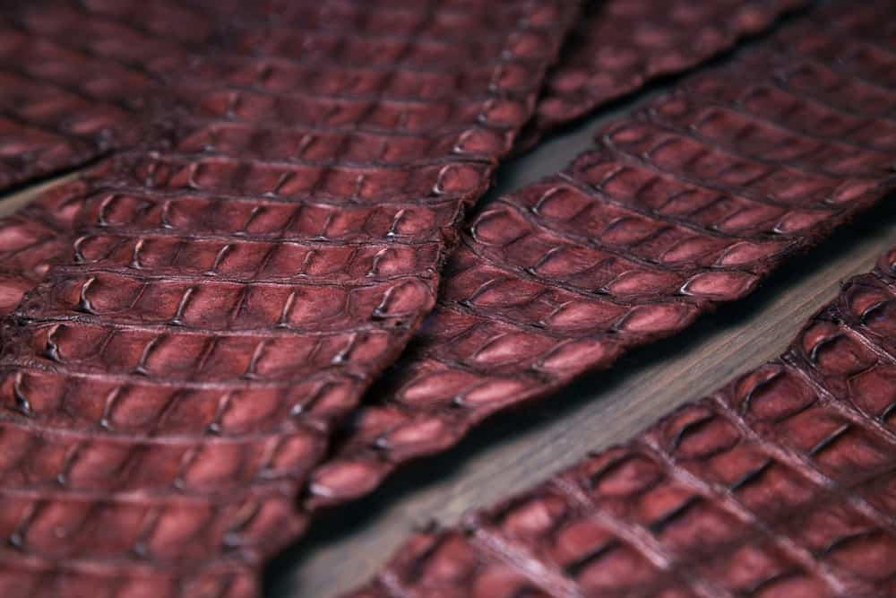 This is a close look at sets of Crocodile Leather on a table.