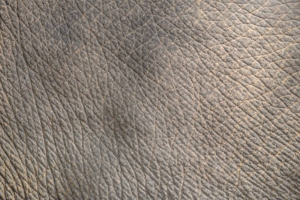 This is a close look at the textured Elephant Leather.