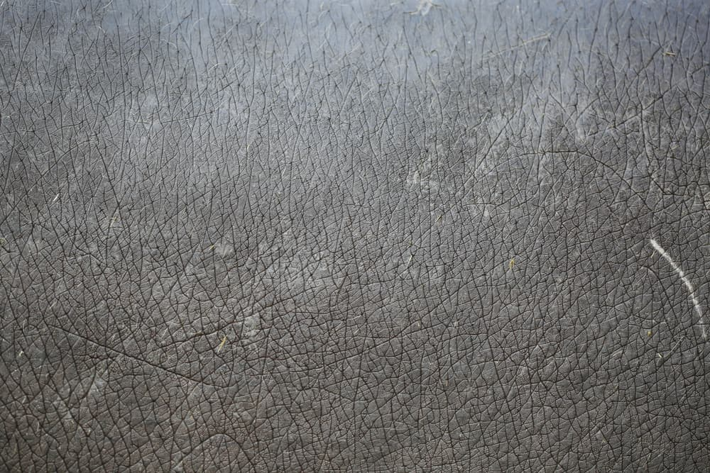 This is a close look at a gray patterned Hippopotamus Leather.