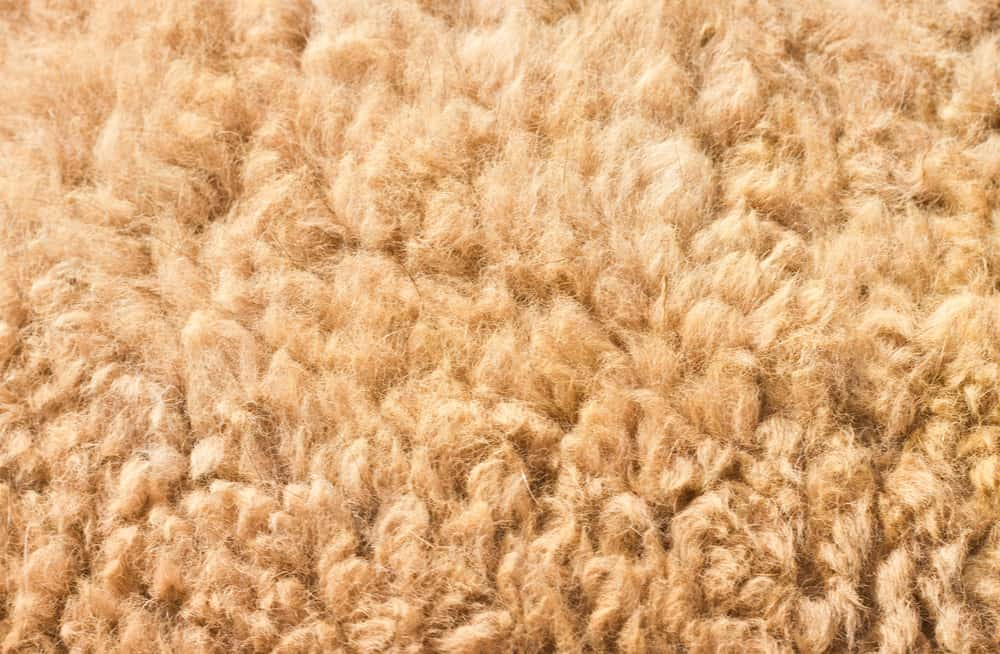 This is a close look at a genuine Camel Hair Wool.