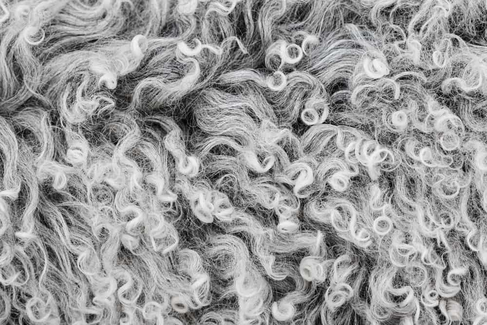 This is a close look at a thick Lambswool or virgin wool.