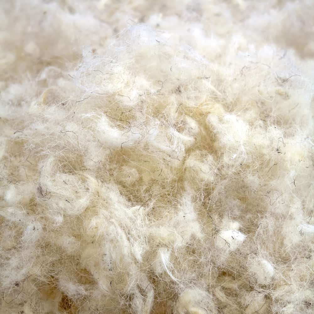 This is a close look at a bunch of beige Raw Wool.
