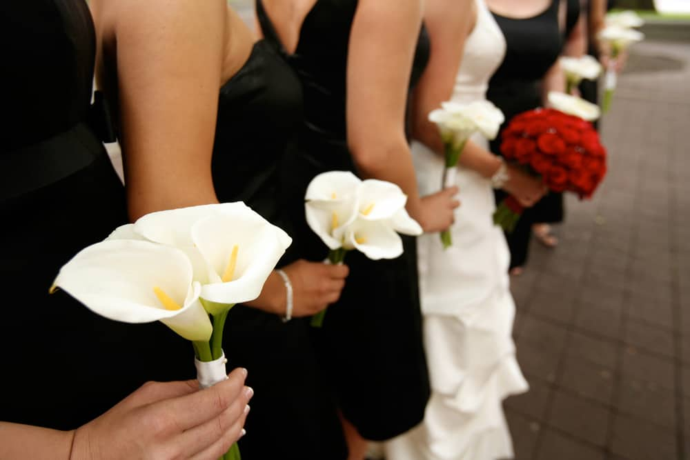 This is a close look at a row of bridesmaids wearing black dresses.