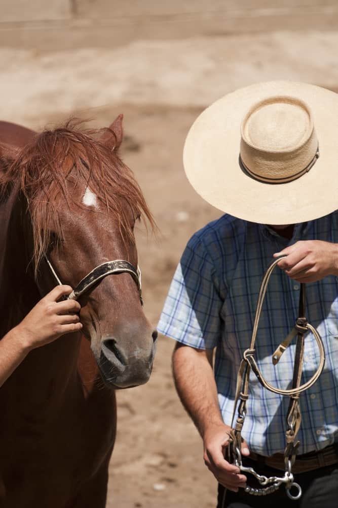 Chilean horseman wearing a plaid polo and a chupalla hat.