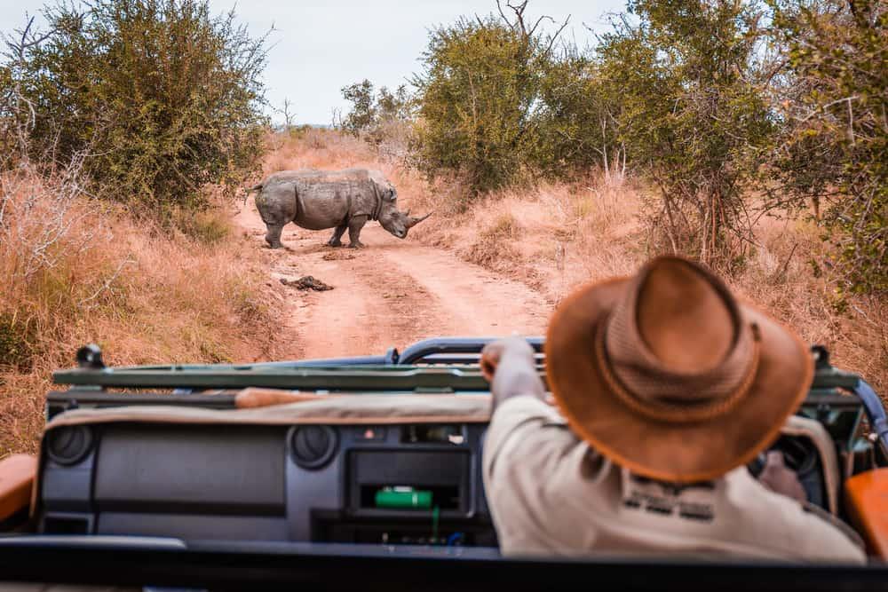 A man wearing a dark hat watching a rhino.