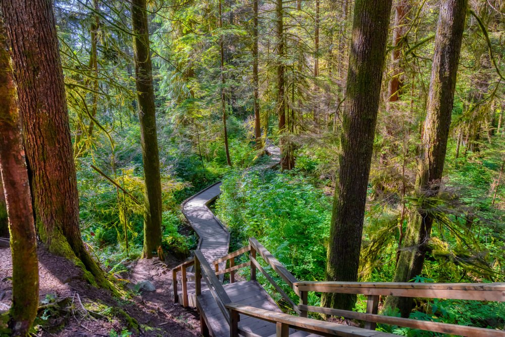 North Vancouver rain forest